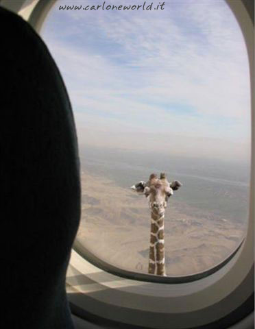 Volo in Africa