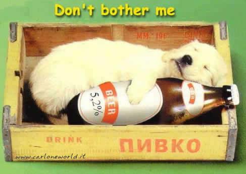 cane birra