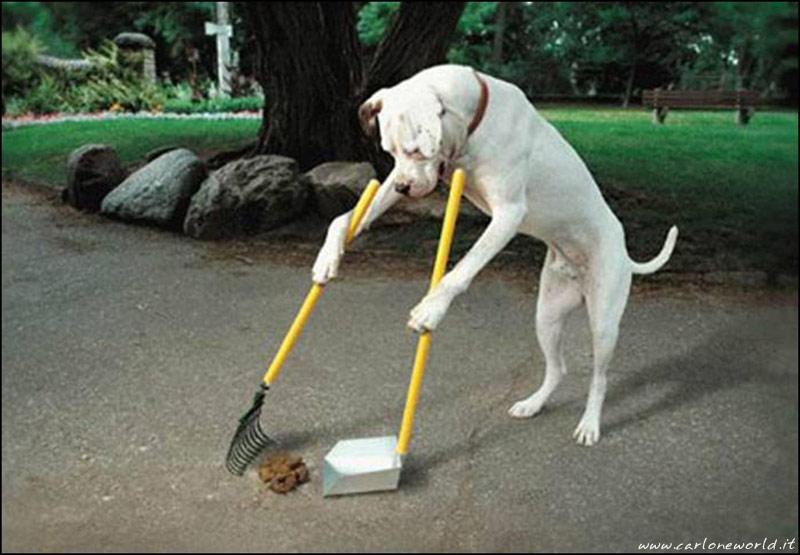 cane civile