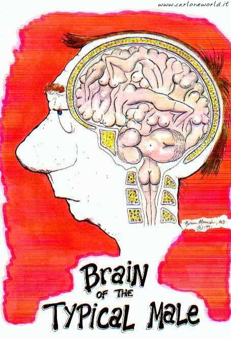 cervello uomo