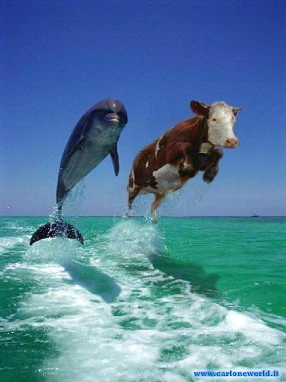 Fotos Curiosas e INcreibles..... - Página 2 Delfini