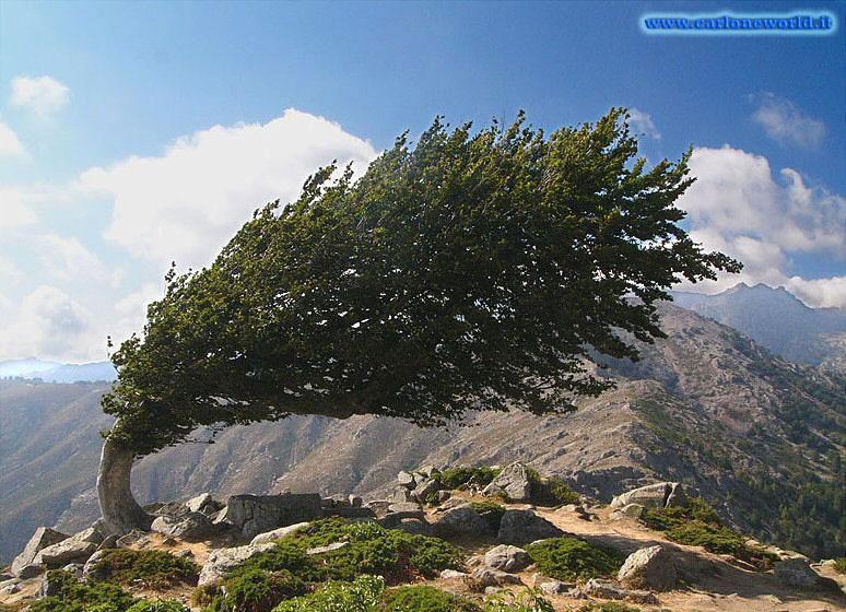 foto dal mondo albero
