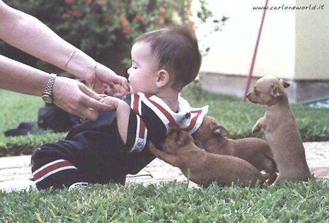 foto divertente bimbo cagnolini