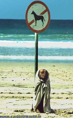 foto divertente cane