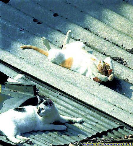 gatti in relax