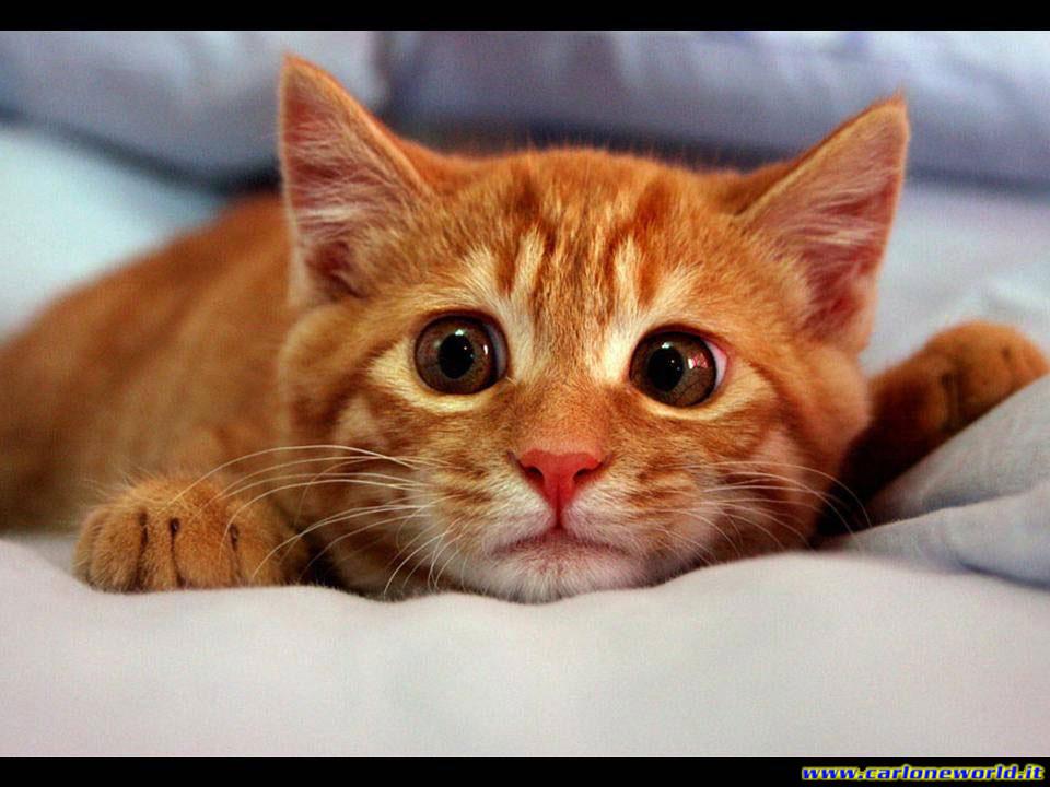 gattino con occhioni dolci