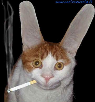 gatto fuma
