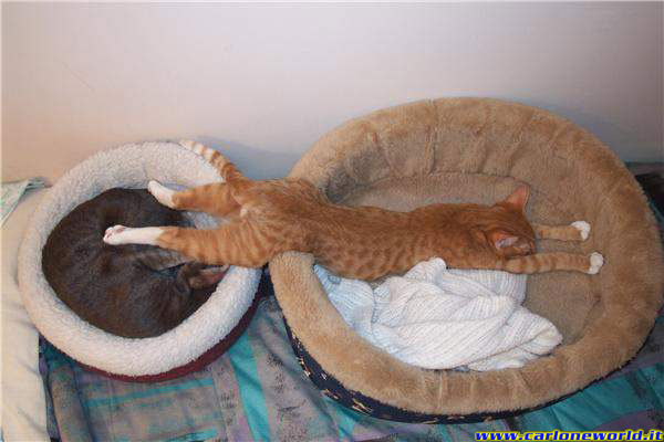 gatto relax