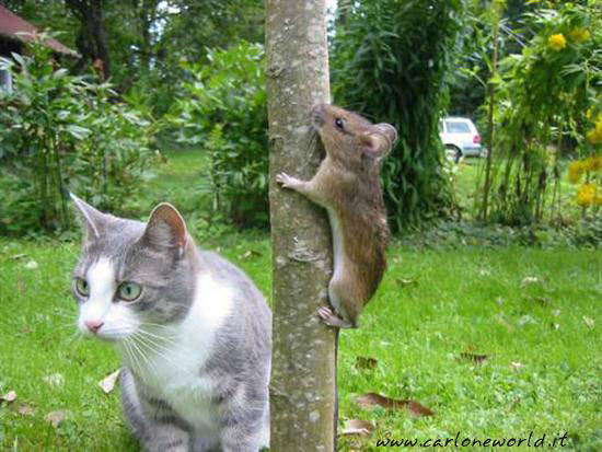 gatto topo