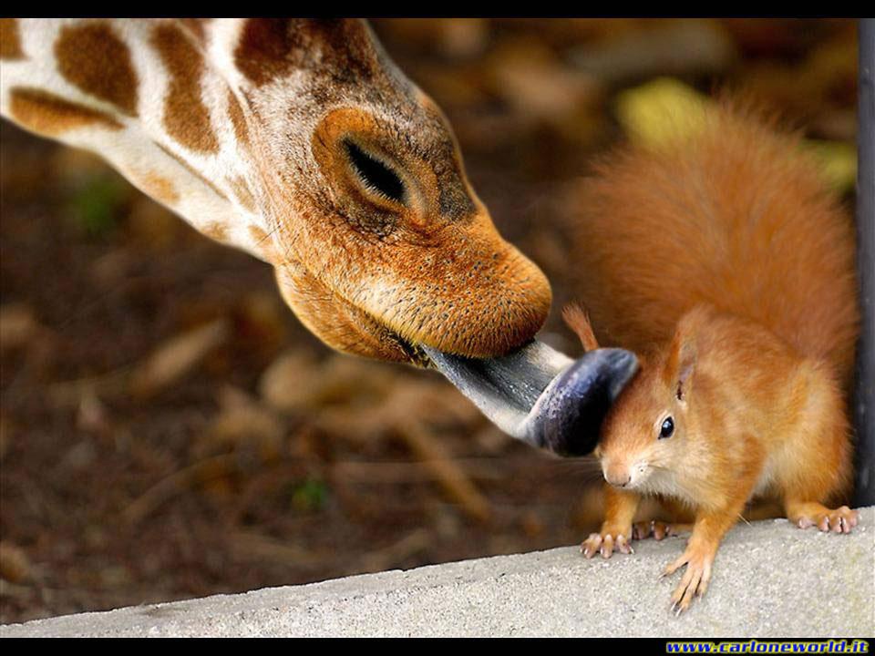 giraffa e scoiattolo