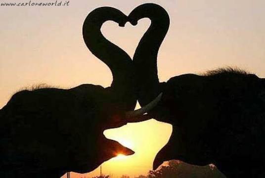 immagine d amore elefanti amore cuore
