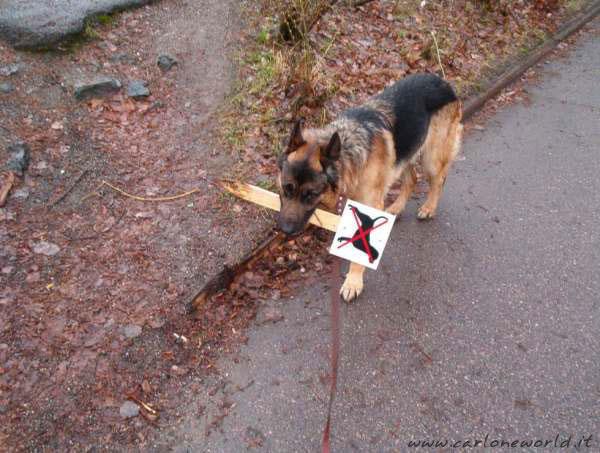 cane intraprendente