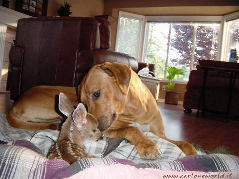 cerbiatto e cane insieme 2