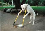 Foto divertente: cane civile