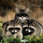 Foto divertente: trova l'intruso!