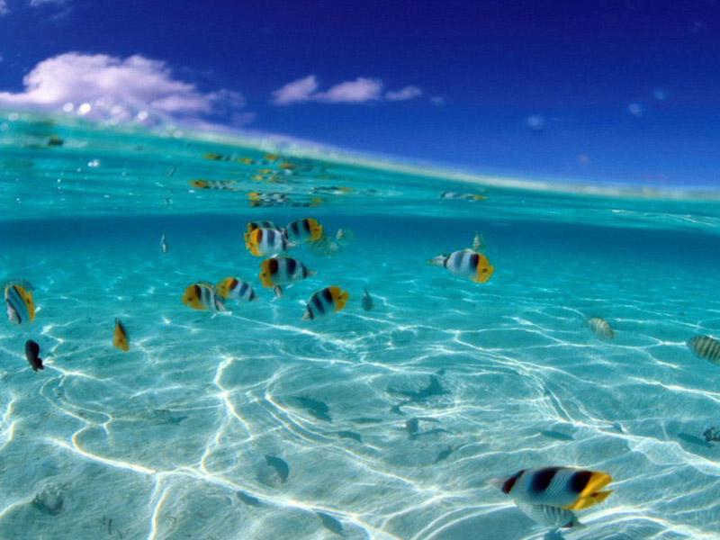 mare cristallino con pesci tropicali