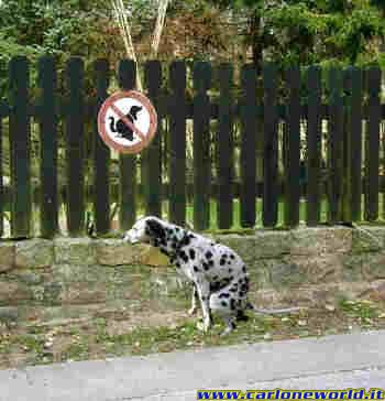 stosunek psow do zakazow