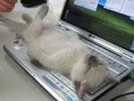 Mai stato stanco così?