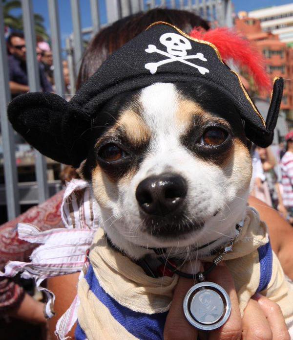 Costume Cane Pirata