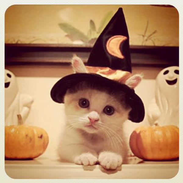 gattino halloween