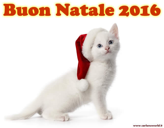 Buon Natale 2016 con tenero gattino
