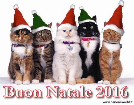 Auguri di Natale 2016 con bellissimi e simpatici gatti