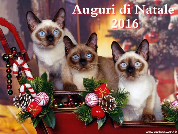 Auguri di Natale 2016 con bellissimi gatti