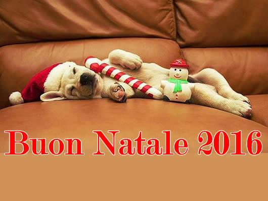 Immagine di Natale: Immagine Natale 2016 cagnolino