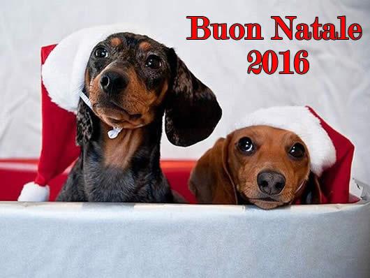 Immagine di Natale: Natale 2016