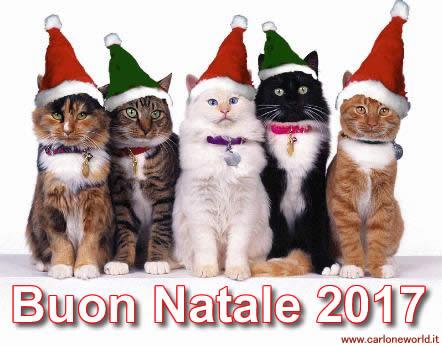 Auguri di Natale 2017 con bellissimi e simpatici gatti