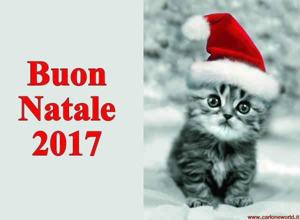 Auguri di buon Natale 2017 con bellissimo e dolce gattino