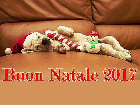 Immagine di Natale: Immagine Natale 2017 cagnolino
