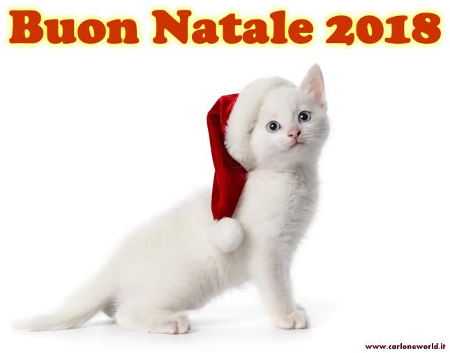 Buon Natale 2018 con tenero gattino