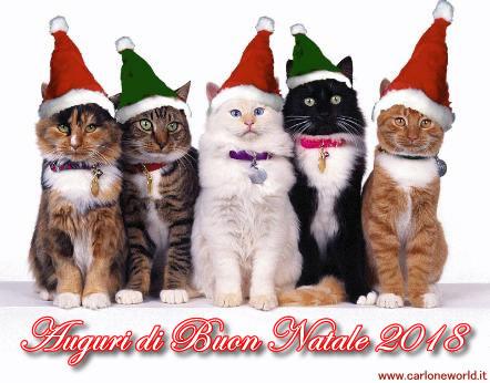 Auguri di Natale 2018 con bellissimi e simpatici gatti