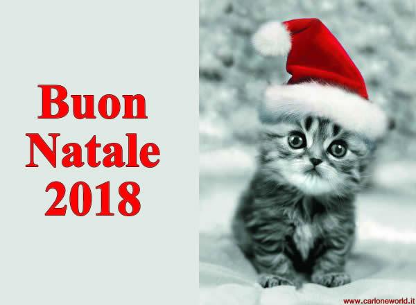 Auguri di buon Natale 2018 con bellissimo e dolce gattino