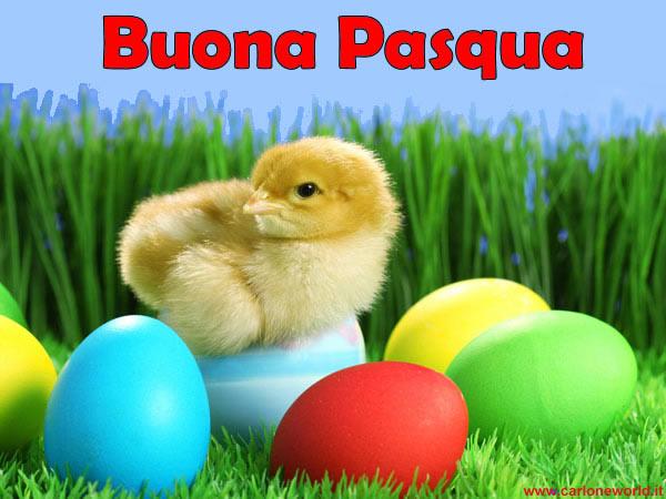 Immagine di pasqua pulcino buona pasqua da condividere for Cartoline auguri di buona pasqua