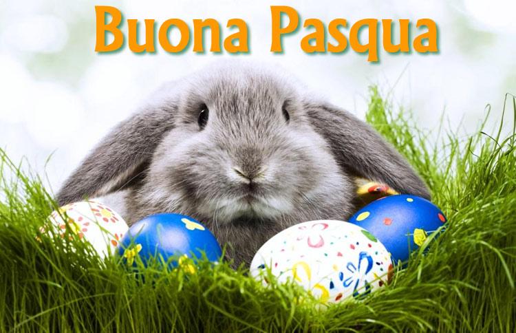 Coniglio Buona Pasqua