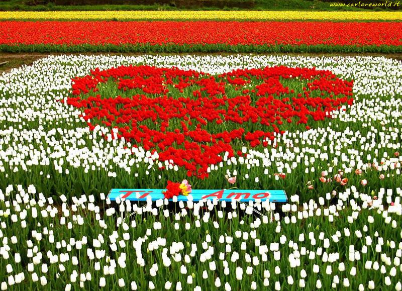 Foto Campo fiorito con Ti Amo