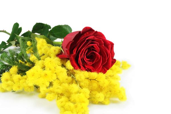 Mimosa e Rosa rossa