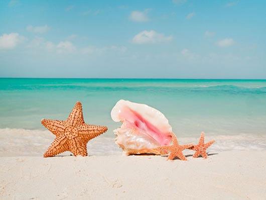 Foto Spiaggia con conchiglia e stella marina