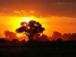 Foto Tramonto Africa