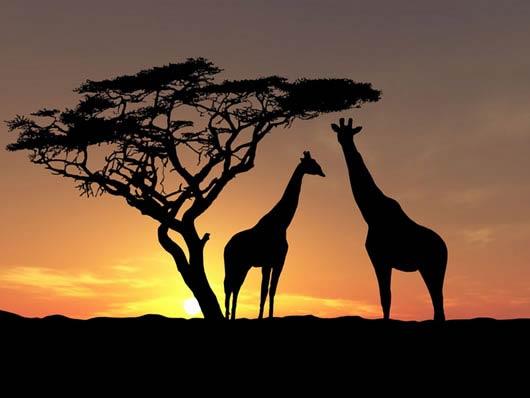 Tramonto con Giraffe